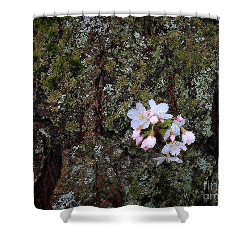 Cherry Blossom Shower Curtain featuring the photograph Cherry Blossoms by Tari Simmons