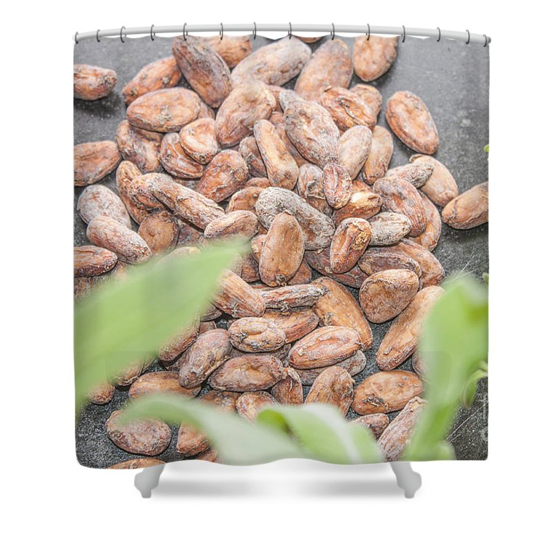 Cocoa Shower Curtain featuring the photograph Cocoa Beans by D R