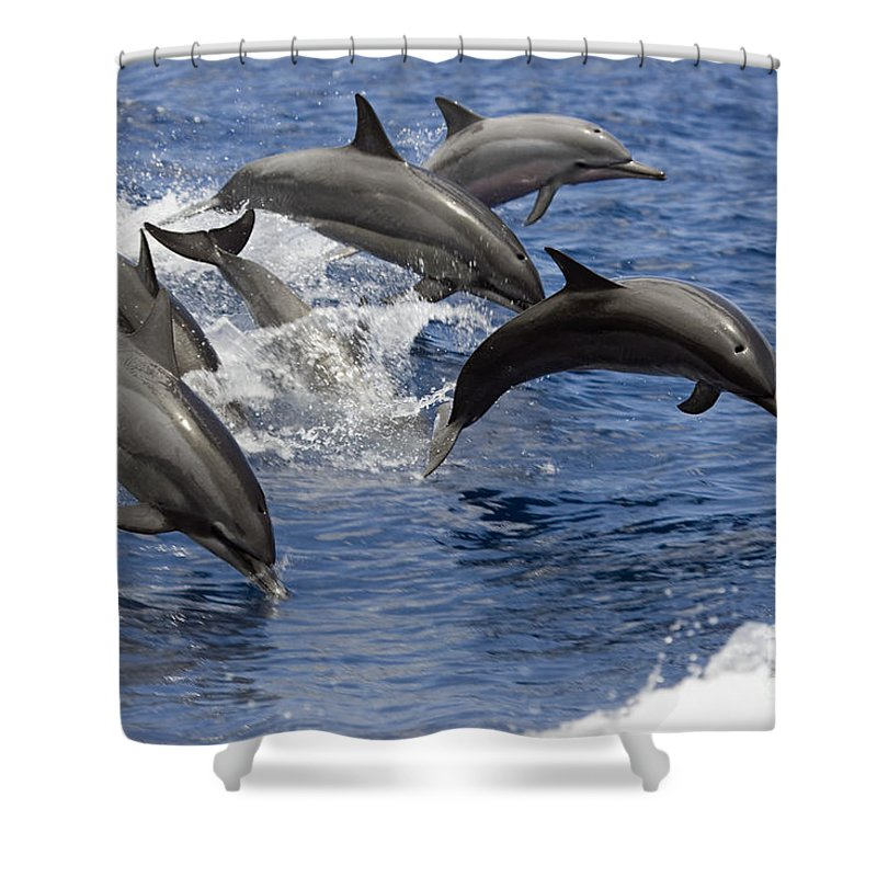 Animal Art Shower Curtain featuring the photograph Dolphins Leaping by Dave Fleetham - Printscapes