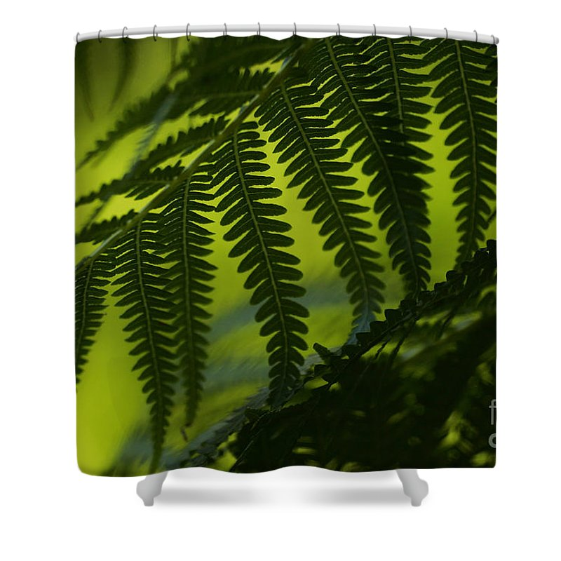 Abstract Shower Curtain featuring the photograph Fern Abstract by Ron Dahlquist - Printscapes