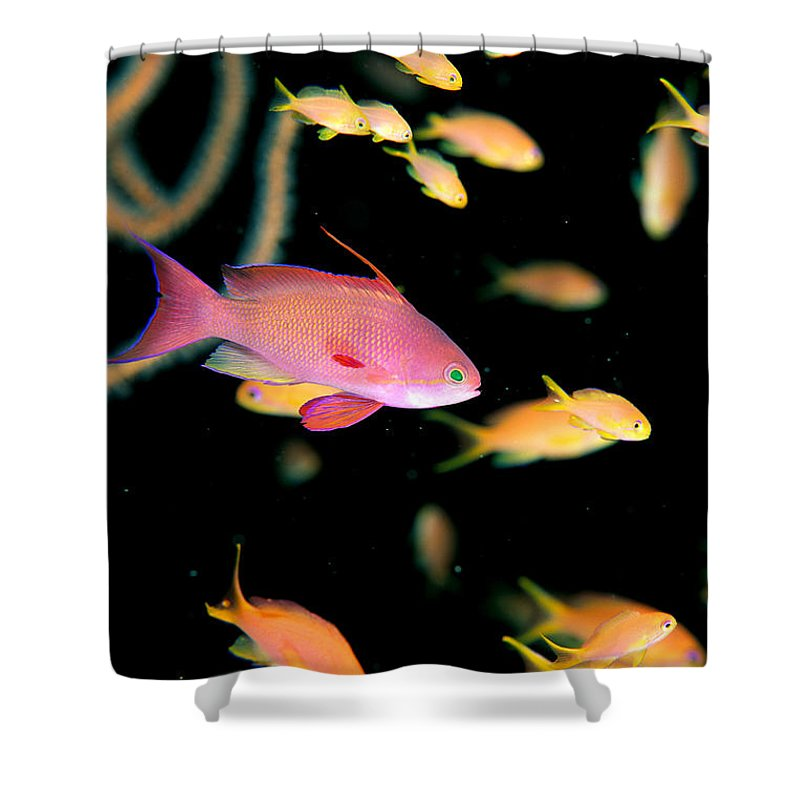 Animal Art Shower Curtain featuring the photograph Fiji, Reef Scene by Dave Fleetham - Printscapes