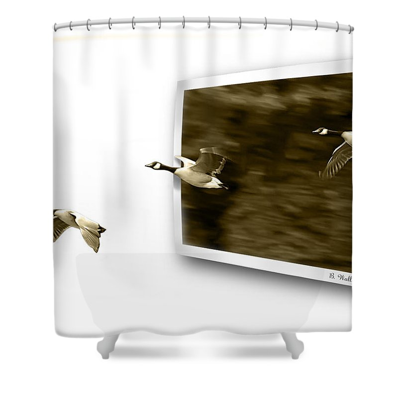 2d Shower Curtain featuring the photograph Follow The Leader by Brian Wallace