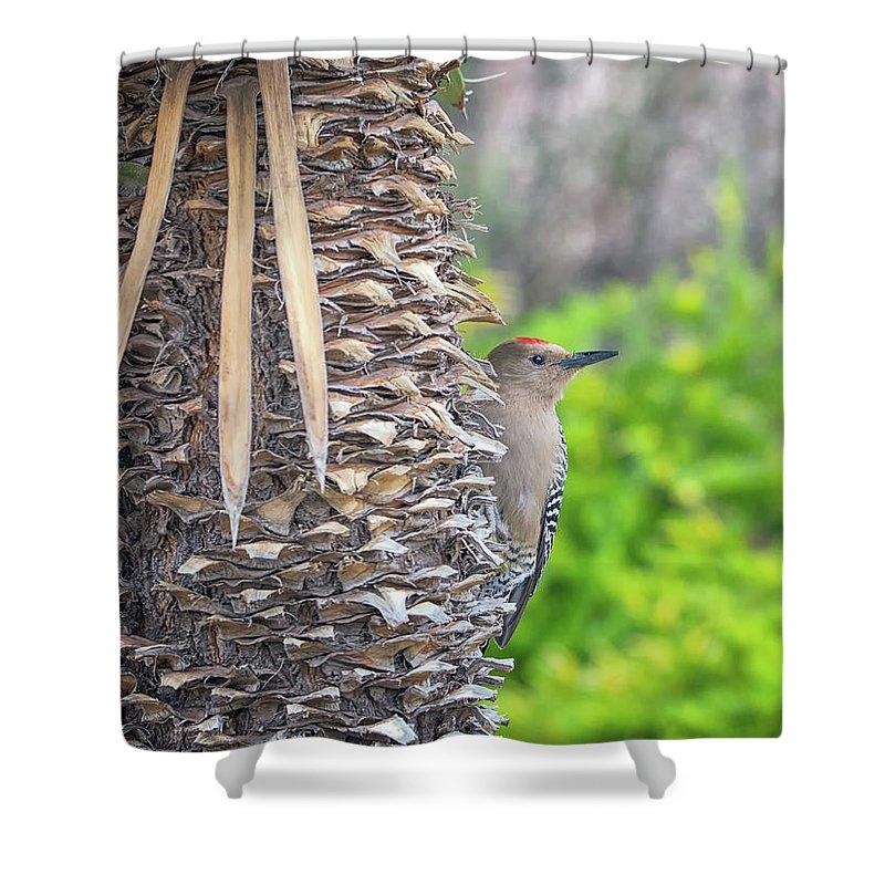 Gila Shower Curtain featuring the photograph Gila Woodpecker by Tam Ryan