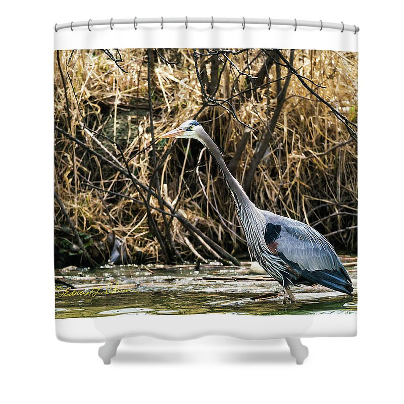 Great Blue Heron Shower Curtain featuring the photograph Great Blue Heron Fishing by Edward Peterson