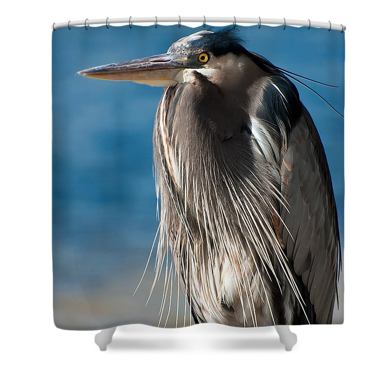 Bird Shower Curtain featuring the photograph Great Blue Heron by Rich Leighton