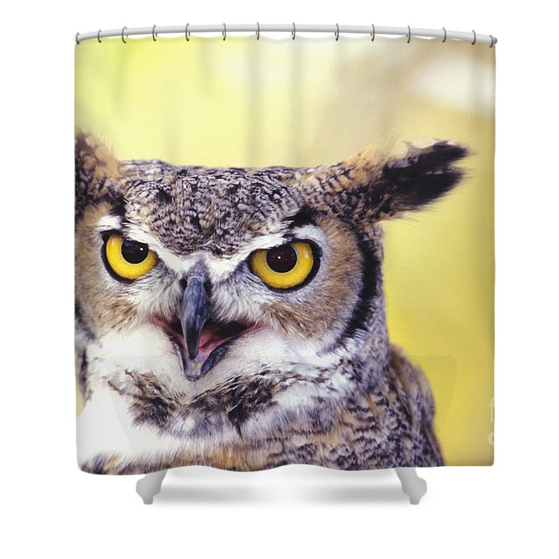 Animal Art Shower Curtain featuring the photograph Great Horned Owl by John Hyde - Printscapes