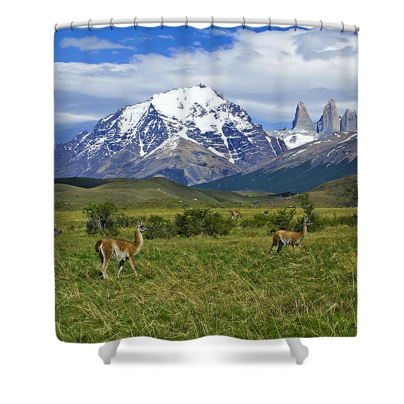 Patagonia Shower Curtain featuring the photograph Guanacos in Torres del Paine by Michele Burgess
