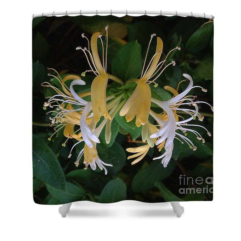 Honeysuckle Vine Yellow And White Blooms Shower Curtain featuring the photograph Honeysuckle Vine by Virginia Artho