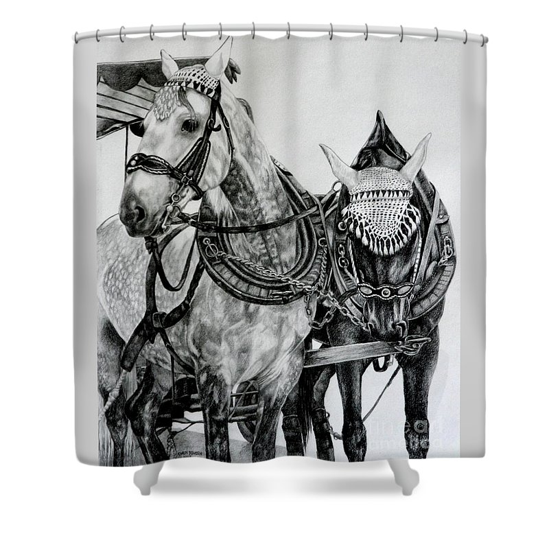 Horse Pencil Black White Germany Rothenburg Shower Curtain featuring the drawing 2 Horses of Rothenburg 2000usd by Karen Bowden