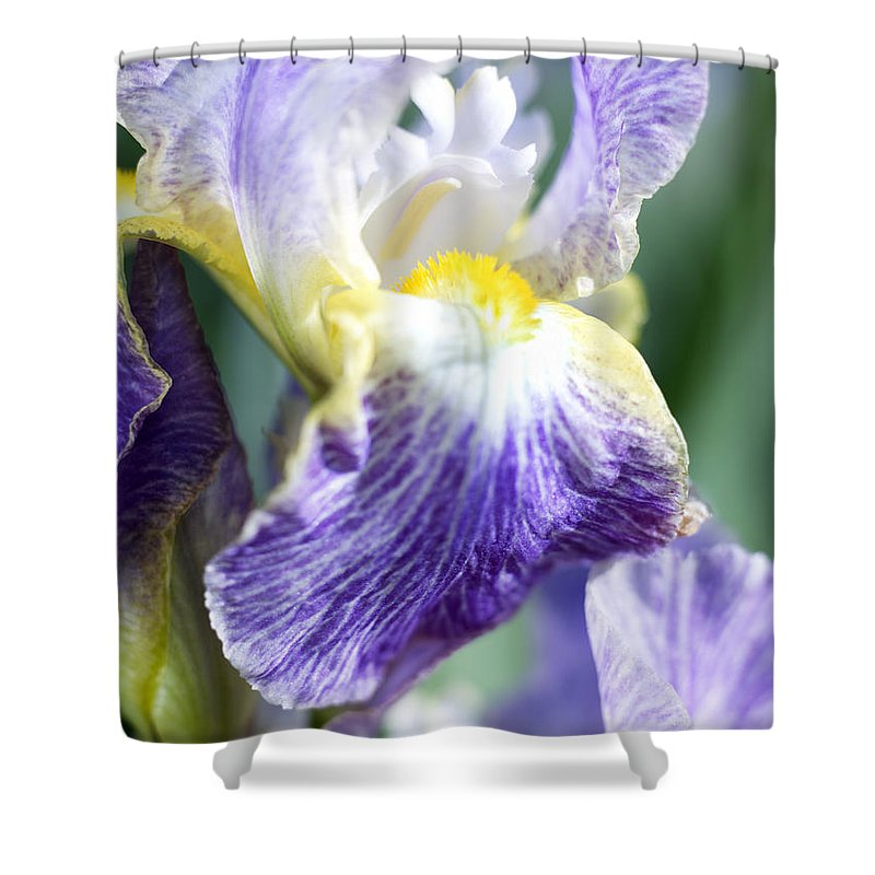 Genus Iris Shower Curtain featuring the photograph Iris Flowers by Tony Cordoza
