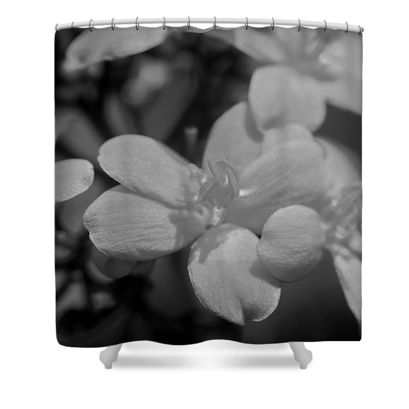 Jatropha Shower Curtain featuring the photograph Jatropha Blossoms Painted Bw by Rich Franco