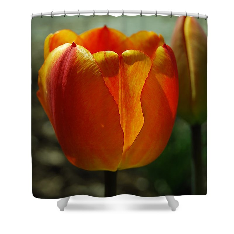 Tulips Shower Curtain featuring the photograph 2 Lips by Trish Hale