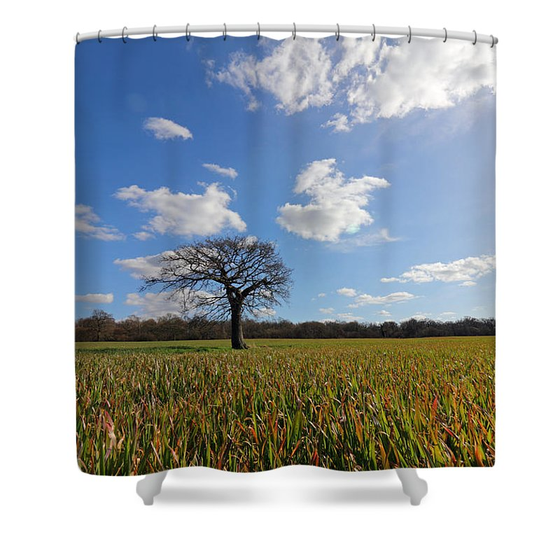 Lone Oak Tree In English Countryside Shower Curtain featuring the photograph Lone Oak Tree In English Countryside by Julia Gavin