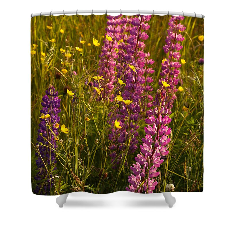 Wildflowers Shower Curtain featuring the photograph Lupins And Buttercups by Irwin Barrett