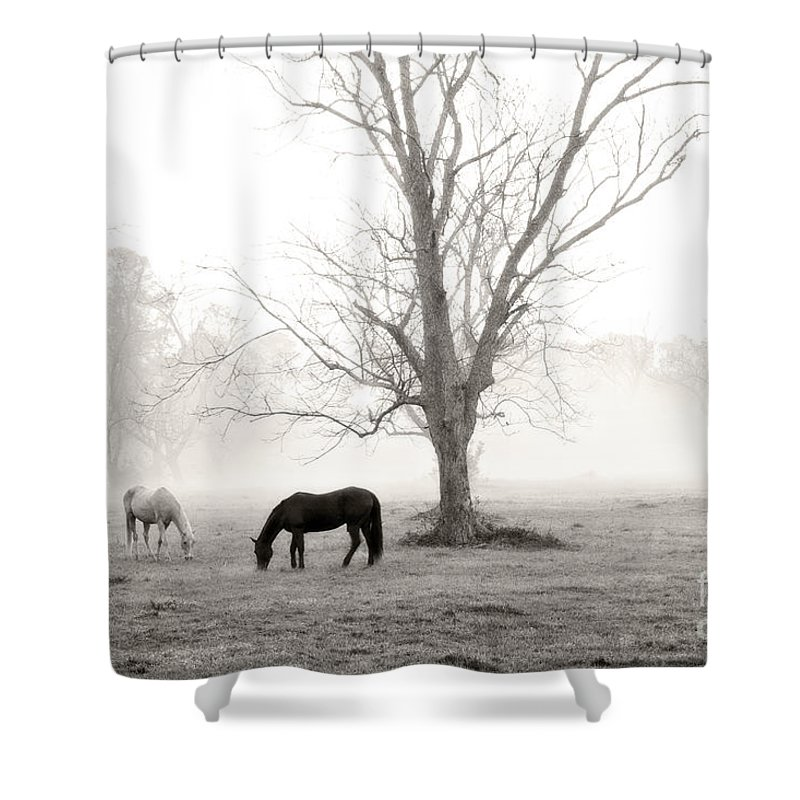 Magical Morning Shower Curtain featuring the photograph Magical Morning by Scott Pellegrin
