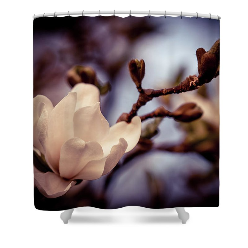 Magnolia Flower Shower Curtain For Sale By Lilia D