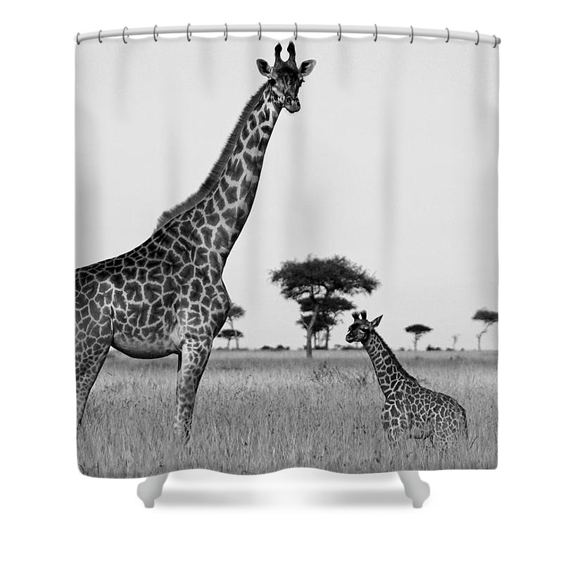 Africa Shower Curtain featuring the photograph Meet My Little One by Michele Burgess