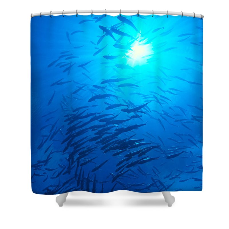 C1925 Shower Curtain featuring the photograph Micronesia Marine Life by Ed Robinson - Printscapes