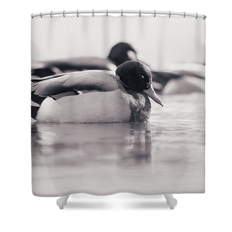 Duck Shower Curtain featuring the photograph Napping by Annette Bush