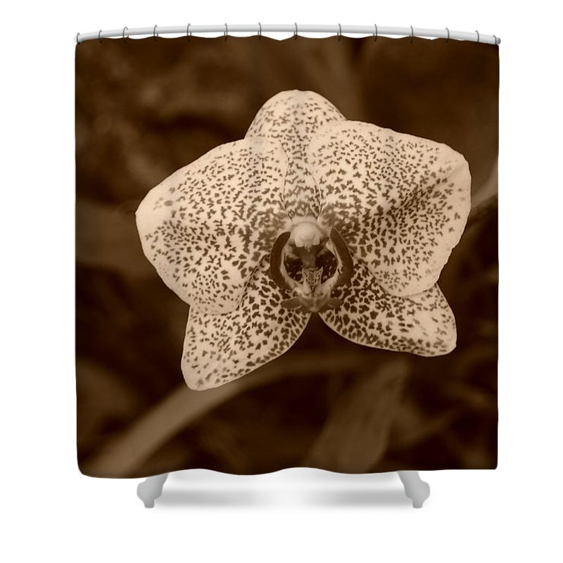 Macro Shower Curtain featuring the photograph Orchid by Rob Hans