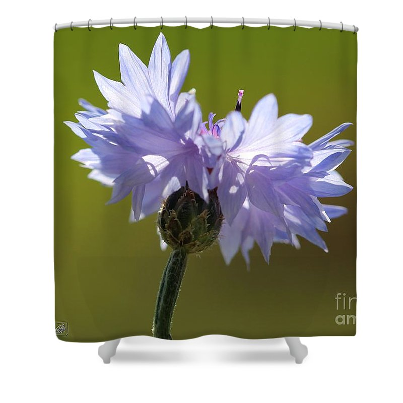 Mccombie Shower Curtain featuring the photograph Pale Blue Bachelor Button From The Double Ball Mix by J McCombie