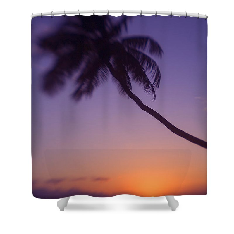 Beach Shower Curtain featuring the photograph Palm Over The Beach by Ron Dahlquist - Printscapes