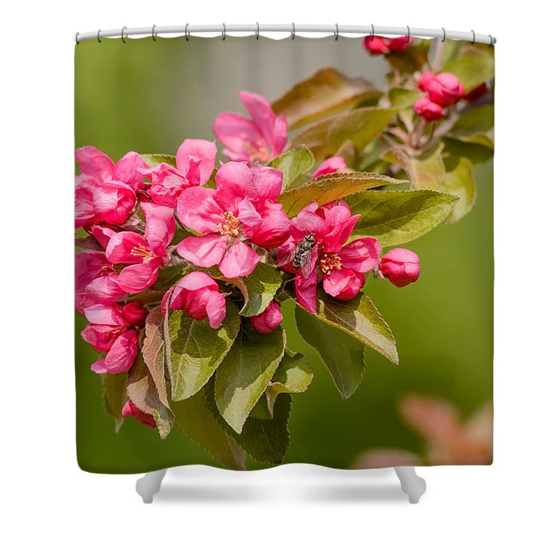 Apple Shower Curtain featuring the photograph Paradise Apples Flowers by Alain De Maximy