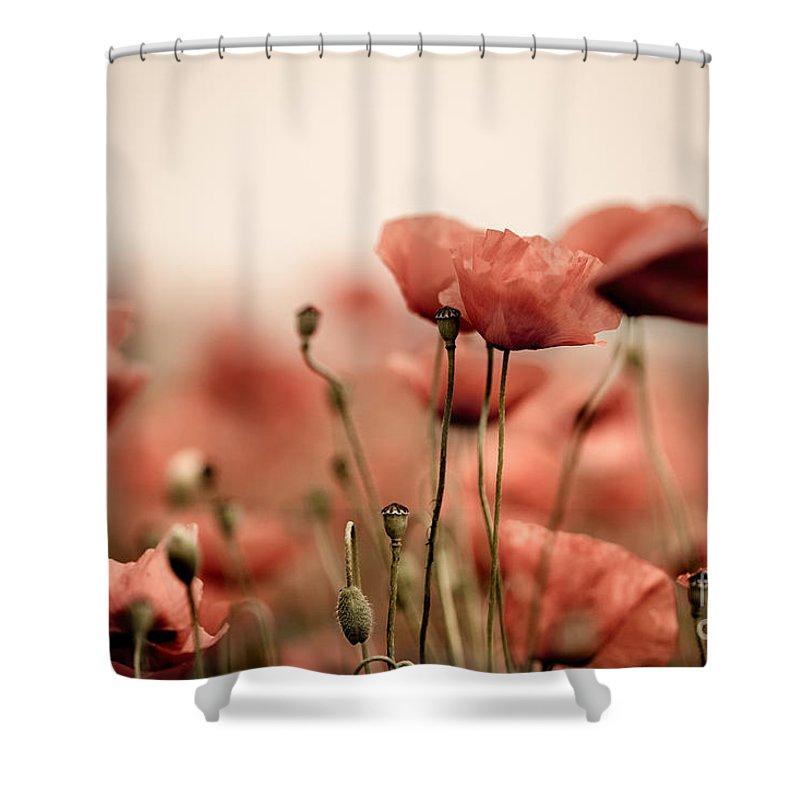 Poppy Shower Curtain featuring the photograph Poppy Dream 2 by Nailia Schwarz