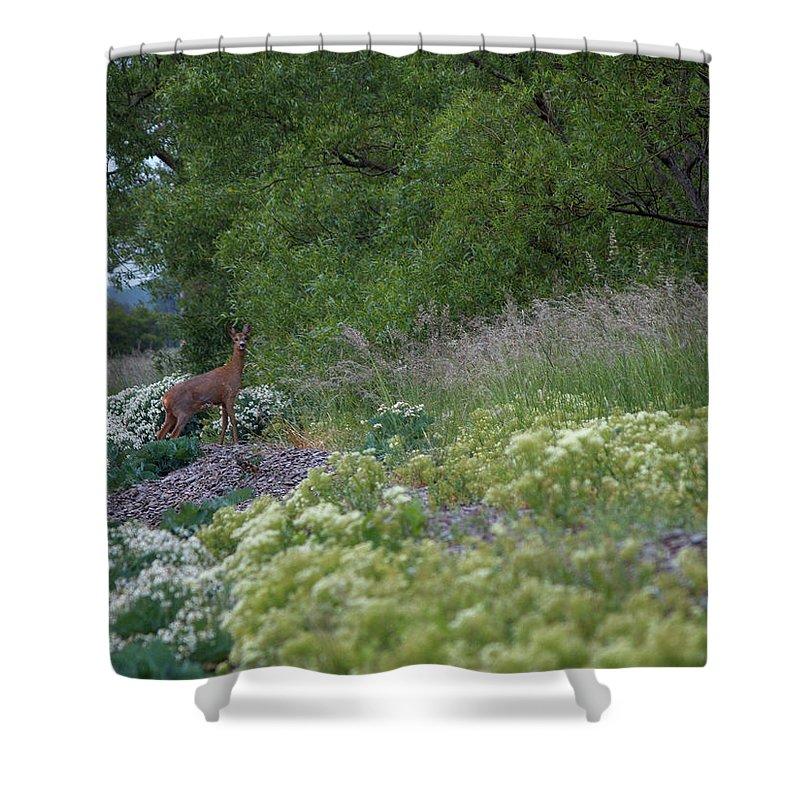 Lehtokukka Shower Curtain featuring the photograph Roe Deer by Jouko Lehto