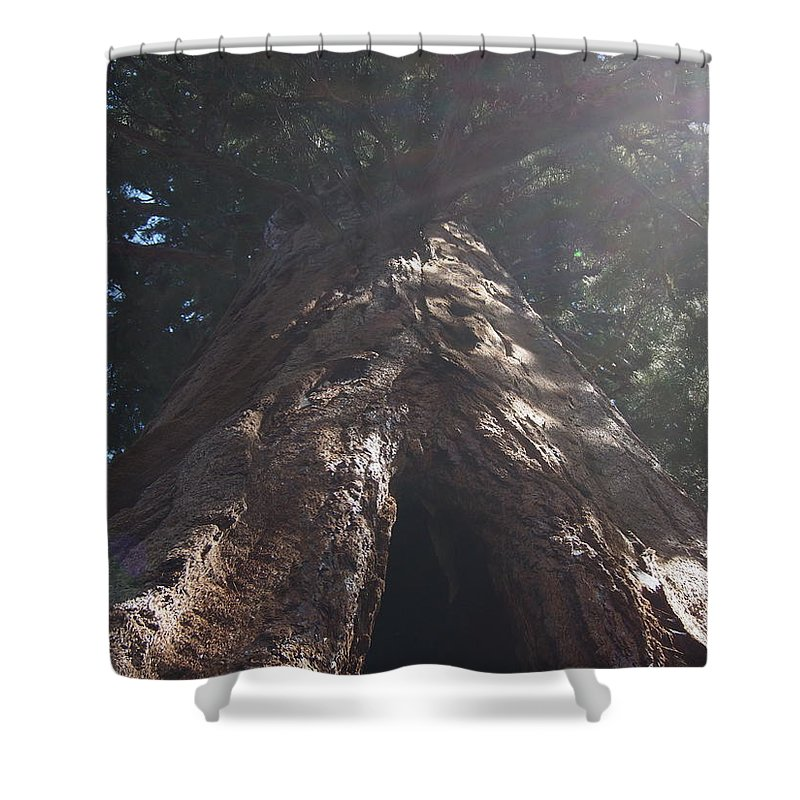 Sequoia Shower Curtain featuring the photograph Sequoia Tree by Matt Collins