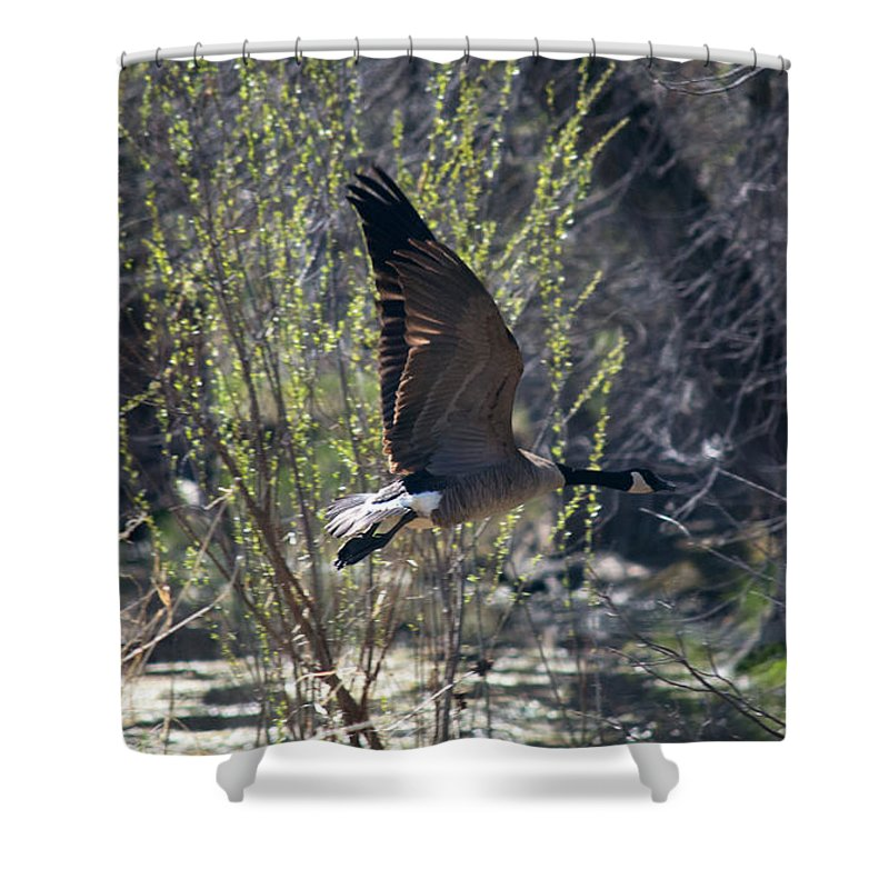 Wetland Shower Curtain featuring the photograph Take Off by Linda Kerkau