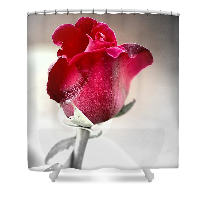 Rose Shower Curtain featuring the photograph The Rose by Donna Bentley