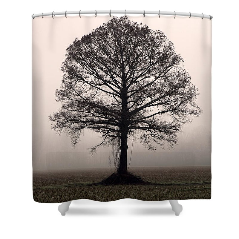 Trees Shower Curtain featuring the photograph The Tree by Amanda Barcon