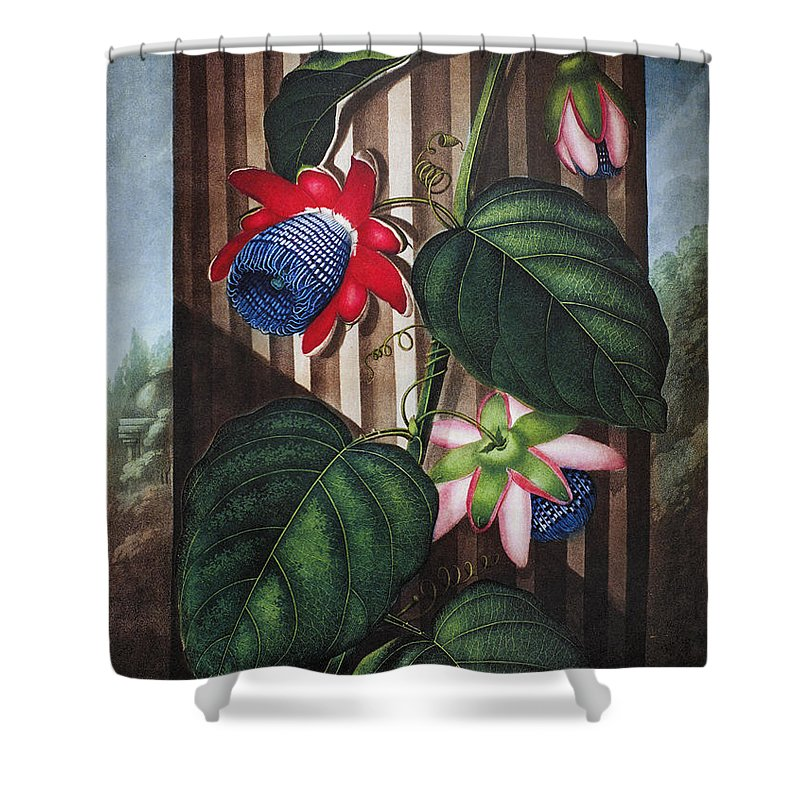1802 Shower Curtain featuring the photograph Thornton: Passion-flower by Granger