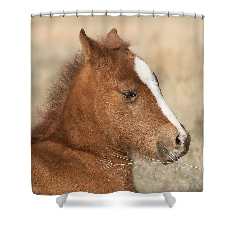 Horse Shower Curtain featuring the photograph Valentino by Kent Keller