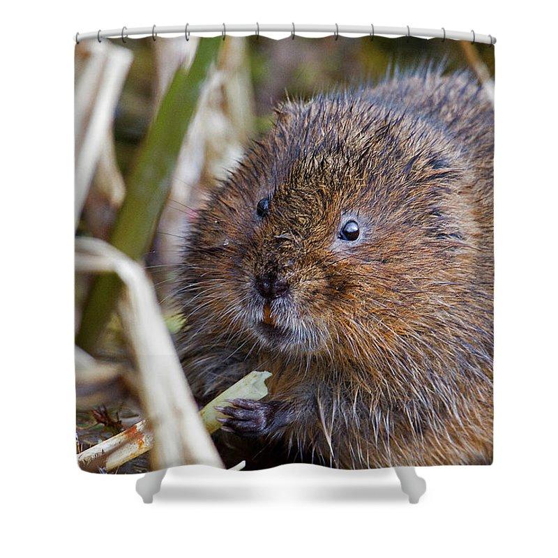 Water Vole Shower Curtain featuring the photograph Water Vole by Bob Kemp
