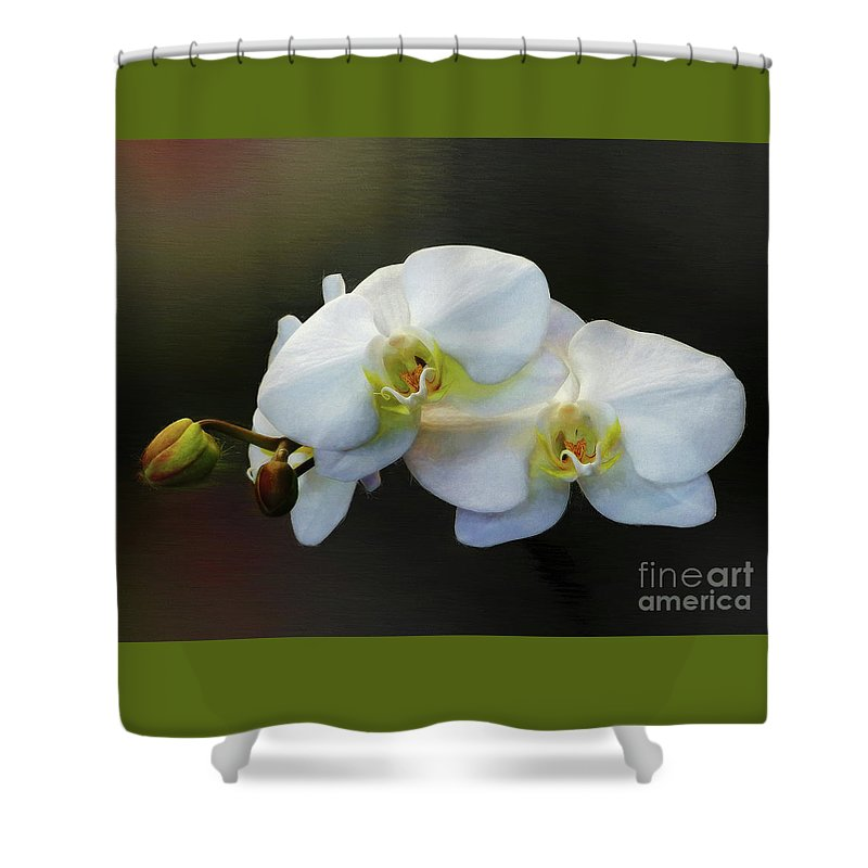 Doritaenopsis Orchid Shower Curtain featuring the photograph White Orchid - Doritaenopsis Orchid by Kaye Menner