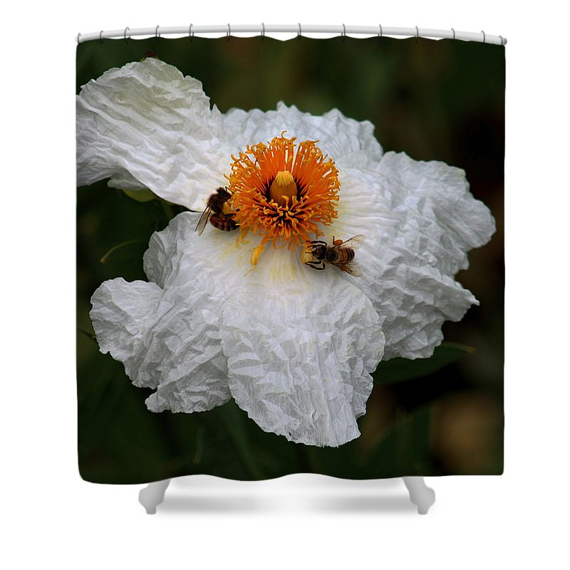 Two Bees Gather Pollen Shower Curtain featuring the photograph White Poppy And Bee by Daniel Unfried