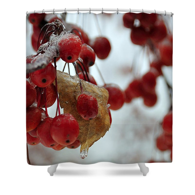 Winter Shower Curtain featuring the photograph Winter Berries by David Arment
