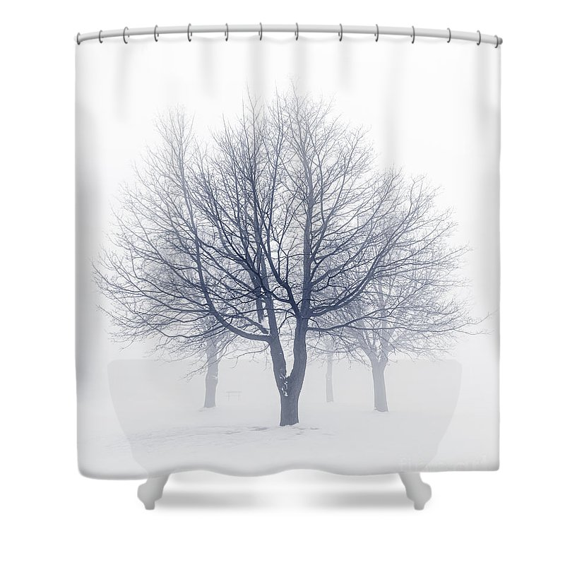 Trees Shower Curtain Featuring The Photograph Winter In Fog By Elena Elisseeva
