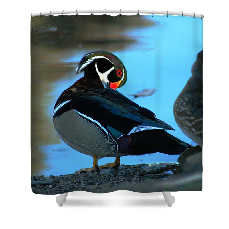 Clay Shower Curtain featuring the photograph Wood Duck by Clayton Bruster