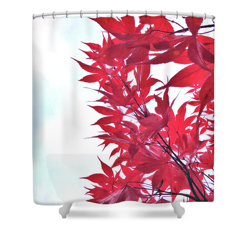 Autumn Shower Curtain featuring the photograph 2017 Red Maple 3 by Victor K