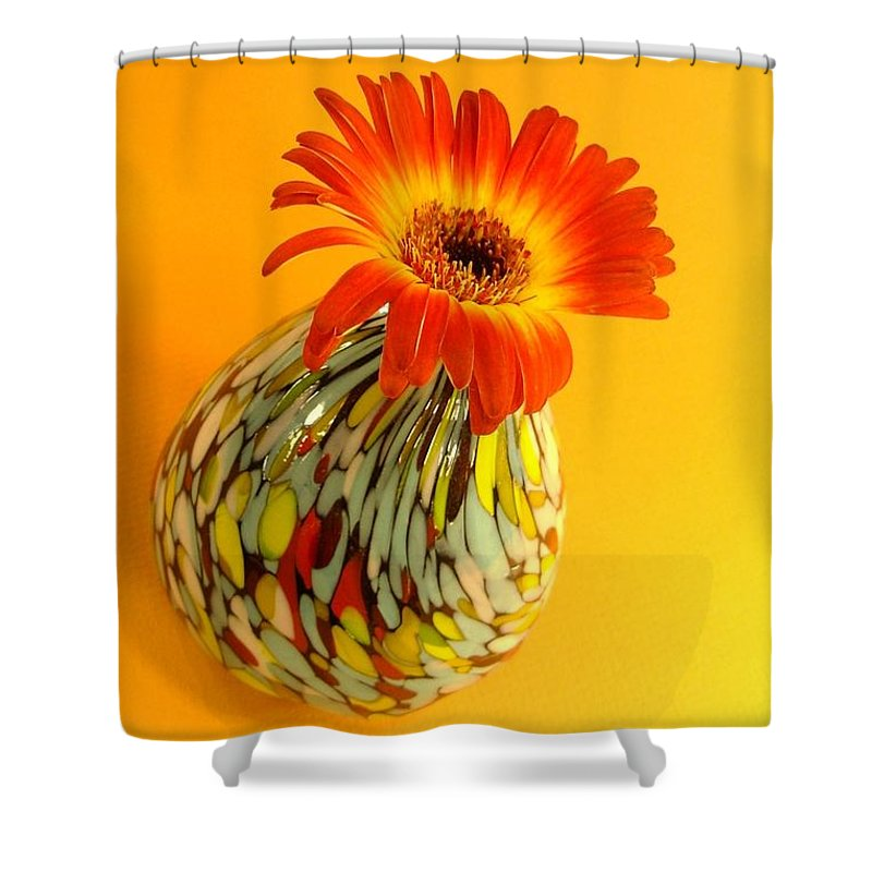 Gerbera Photographs Shower Curtain featuring the photograph 2335c-001 by Kimberlie Gerner