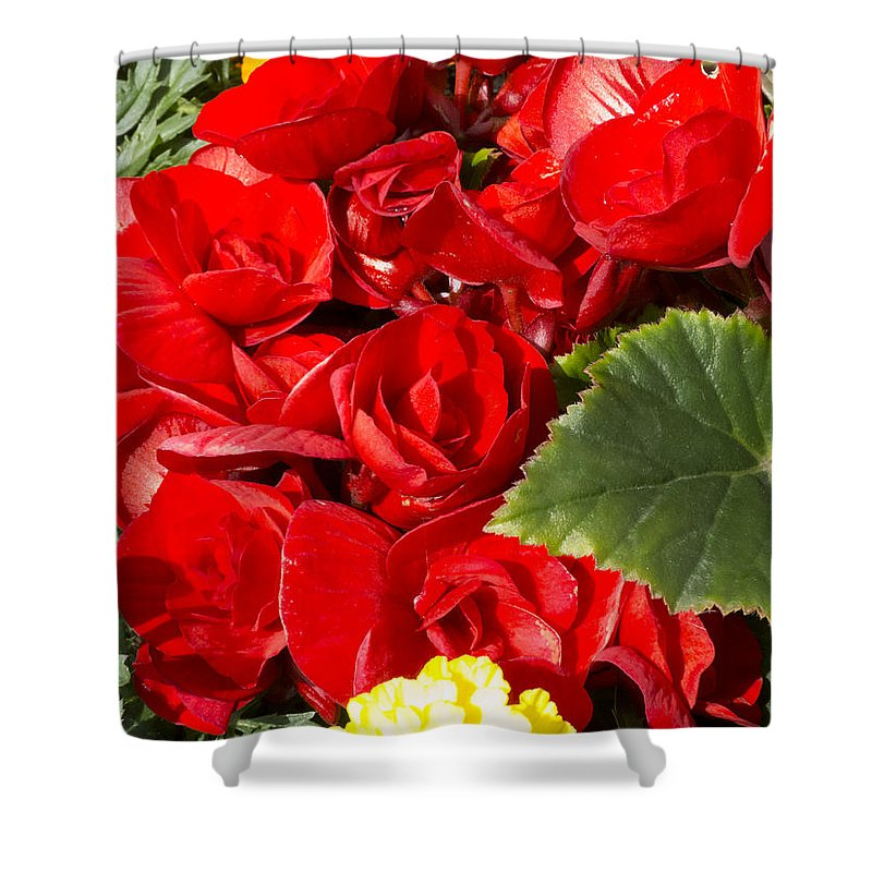 Flowers Shower Curtain featuring the photograph ,, Flowers ,, by Ricardas Marcinkevicius