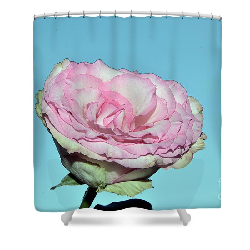 Flowers Shower Curtain featuring the photograph Beautiful Rose by Elvira Ladocki