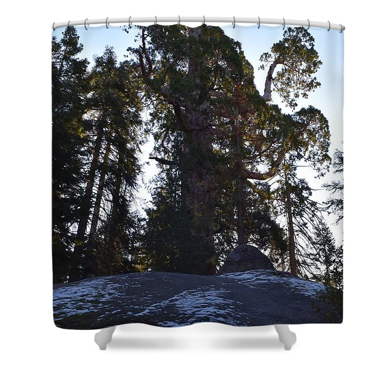 Bark Shower Curtain featuring the photograph Giant Sequoia Trees by Will Sylwester