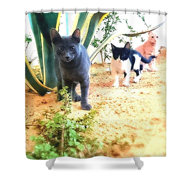 3cats Cat Cats Attack Green Cactus Grey Cat Shower Curtain featuring the photograph 3 Cat Attack by Mina Milad