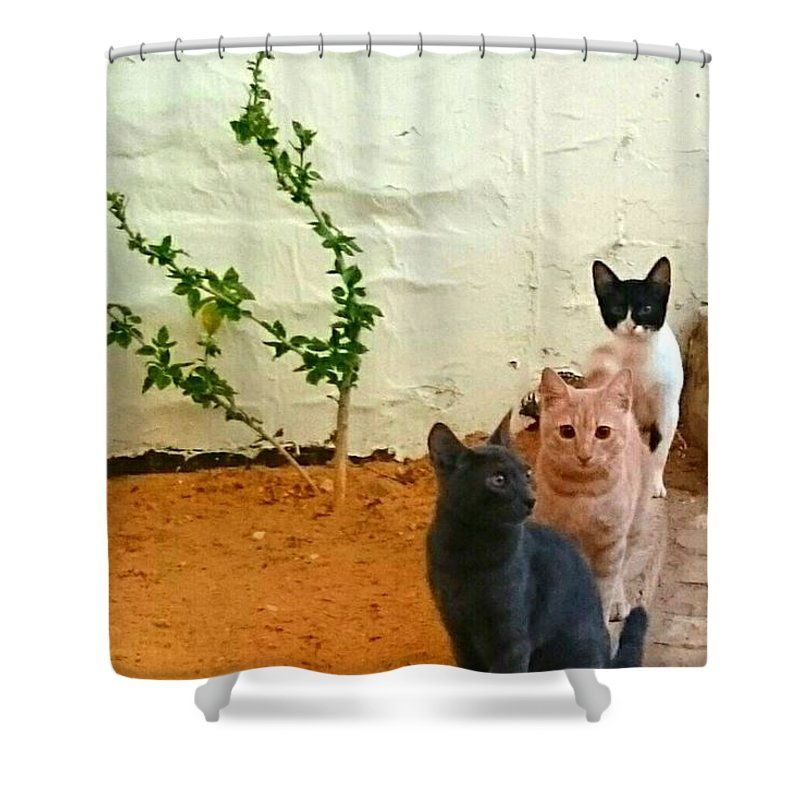 Cats Sand Desert Grey Black White Row Of Cats Shower Curtain featuring the photograph 3 Cats by Mina Milad