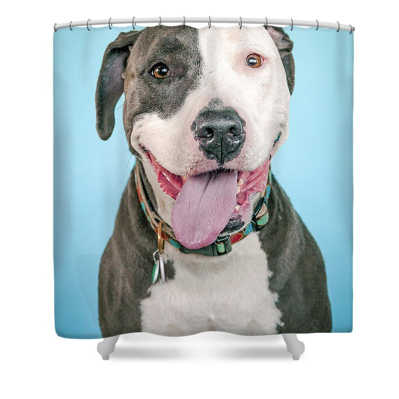 Dog Shower Curtain featuring the photograph Cara by Pit Bull Headshots by Headshots Melrose