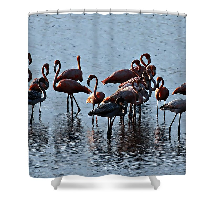 Flamingo Shower Curtain featuring the photograph Flamingo Family by Galeria Trompiz
